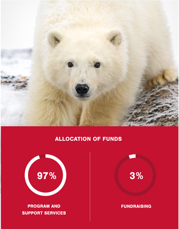 Adopt Wild Animals Protect Wildlife Conservation Donations
